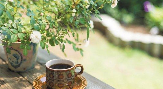 coffee_in_garden_r900x493